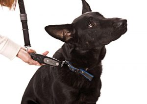 Top 10 best dog training leashes